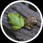 Gran-cuenca-rio-teusaca-biodiiversidad-anfibios-reptiles