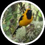 Gran-cuenca-rio-teusaca-biodiiversidad-aves-2