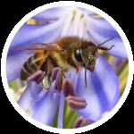 Gran-cuenca-rio-teusaca-biodiiversidad-insectos