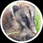 Gran-cuenca-rio-teusaca-biodiiversidad-mamiferos-4